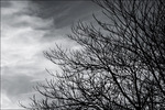 Silhouette_tree_branches_against_clouds